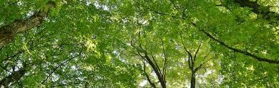 LEAF subsidizes planting of trees and shrubs in Ajax, Toronto and York Region
